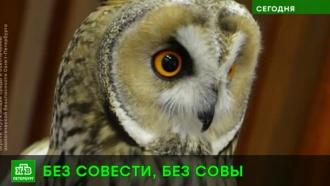 В Петербурге ушастую сову спасли от фотографа