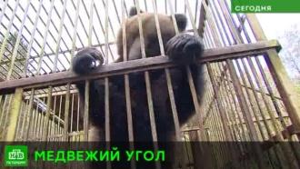 Питерские благотворители ищут просторную клетку для медведицы Фени
