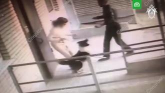 В&nbsp;<nobr>Ростове-на-Дону</nobr> собака спасла хозяйку от убийцы с&nbsp;ножом