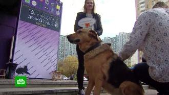 Против жестокости и насилия: в Москве прошла акция «Рок в защиту животных»