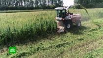 Нижегородский бизнесмен рассказал, как выращивает коноплю