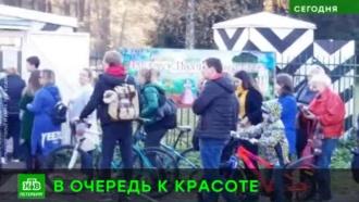 Петербуржцы выстроились в очередь в пригородные парки