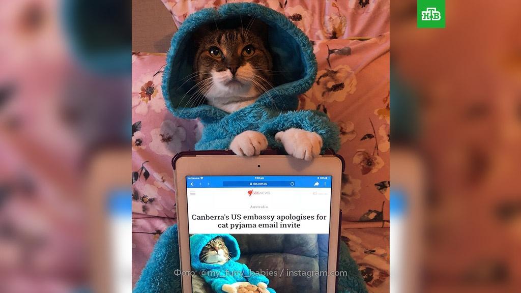 Посольство США случайно разослало австралийцам фотографию кота в пижаме.Австралия, кошки, курьезы, США, дипломатия.НТВ.Ru: новости, видео, программы телеканала НТВ