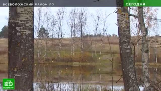 В Ленобласти озеро Круглое превратили в земельный участок.Ленинградская область, реки и озера.НТВ.Ru: новости, видео, программы телеканала НТВ