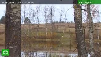 В Ленобласти озеро Круглое превратили в земельный участок
