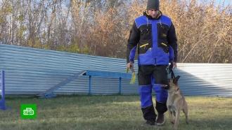 В Кузбассе набрали первый волонтерский кинологический отряд
