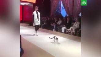Бездомная кошка забралась на подиум во время модного показа в Стамбуле
