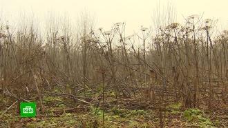 Борьба сборщевиком: какие наказания предусмотрены для фермеров идачников