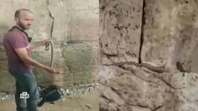 Апокалипсис близко: зловещая змея на Стене Плача привела к массовой истерии по всему миру.Израиль, иудаизм, конец света, мистика и оккультизм, религия.НТВ.Ru: новости, видео, программы телеканала НТВ