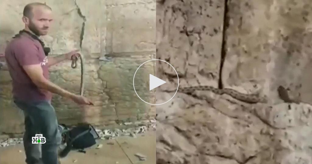Апокалипсис близко: зловещая змея на Стене Плача привела к массовой истерии по всему миру