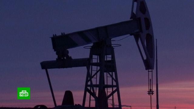 Паника: биржевики объяснили обвал на мировом рынке нефти.ОПЕК, США, биржи, нефть, экономика и бизнес.НТВ.Ru: новости, видео, программы телеканала НТВ