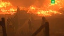 Калифорнию уничтожает «ветер дьявола».Стену огня в Калифорнии никто не может остановить. С таким ужасом США не сталкивались никогда, признал Дональд Трамп.ЗаМинуту, лесные пожары, стихийные бедствия, США.НТВ.Ru: новости, видео, программы телеканала НТВ
