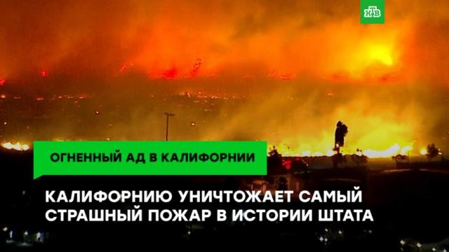 Калифорнию уничтожает «ветер дьявола».ЗаМинуту, лесные пожары, стихийные бедствия, США.НТВ.Ru: новости, видео, программы телеканала НТВ