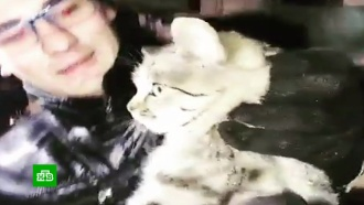 В Ростове-на-Дону ищут дом выжившему в моторном отсеке автомобиля котенку