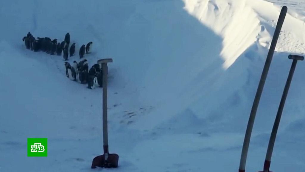 Документалисты канала BBC Earth спасли застрявших в овраге пингвинов.СМИ, журналистика, птицы, телевидение.НТВ.Ru: новости, видео, программы телеканала НТВ