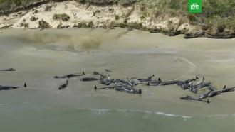 В Новой Зеландии более 140 дельфинов выбросились на берег