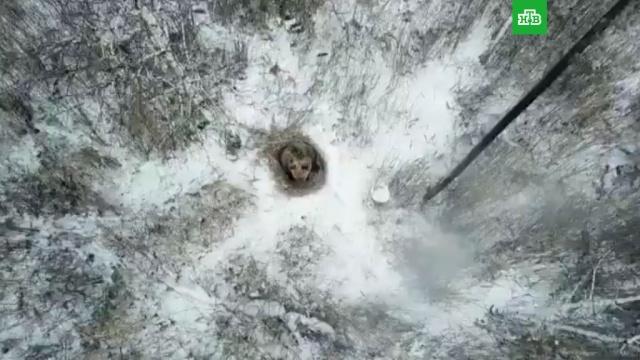Под Челябинском медведь вырыл берлогу возле трассы ивпал вспячку.НТВ.Ru: новости, видео, программы телеканала НТВ