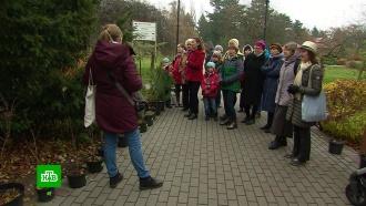 ВКалининграде набирают популярность пешие экскурсии по маршрутам народных гидов