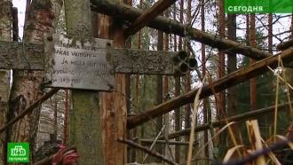 Неравнодушный поисковик восстанавливает историю заброшенного ингерманландского кладбища