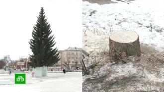 Уральский чиновник лишился работы из-за новогодней елки