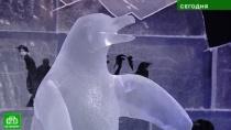 На петербургском фестивале ледовых скульптур можно совершить кругосветку