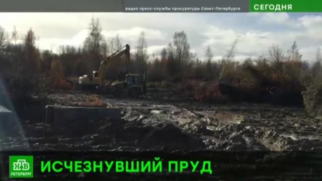 Закопавшие пруд в Петергофе ответят перед законом.Петергоф, Санкт-Петербург, реки и озера, строительство.НТВ.Ru: новости, видео, программы телеканала НТВ