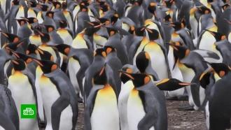 Британские ученые: Brexit угрожает пингвинам