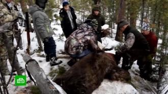 Зоозащитники требуют наказать иркутского губернатора за убийство спящего медведя