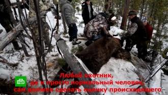Иркутскому губернатору грозит дело <nobr>из-за</nobr> видео срасстрелом спящего медведя