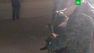 Спасатели вМагнитогорске достали <nobr>из-под</nobr> завалов собаку
