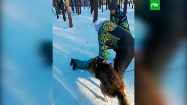 Нападение волка на ребенка вЧелябинске попало на видео.НТВ.Ru: новости, видео, программы телеканала НТВ