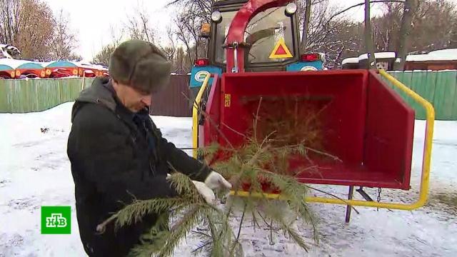 В Москве стартовала акция по сбору новогодних елок.Москва, Новый год, экология.НТВ.Ru: новости, видео, программы телеканала НТВ
