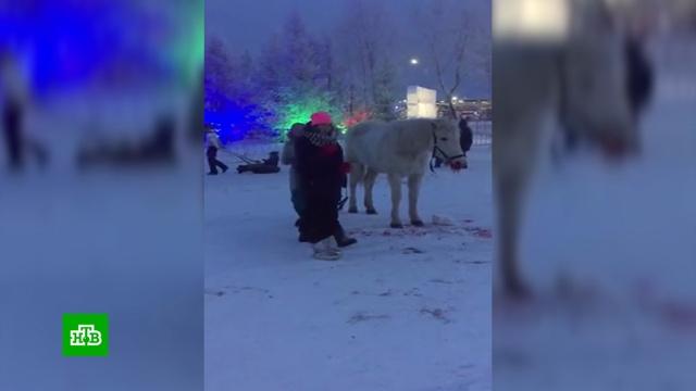 В Красноярске упавшую от усталости лошадь избили на глазах у толпы.Красноярск, животные.НТВ.Ru: новости, видео, программы телеканала НТВ