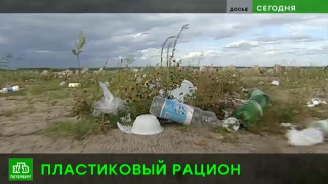 Реки и озера Петербурга и области загрязнены микропластиком.Ленинградская область, Санкт-Петербург, загрязнение окружающей среды, реки и озера, экология.НТВ.Ru: новости, видео, программы телеканала НТВ