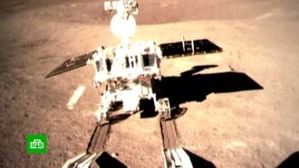 Китайцы готовят на Луне эксперимент сличинками икартошкой