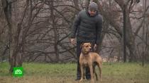 ВСеверной Осетии начали разводить редких собак ссуровым взглядом