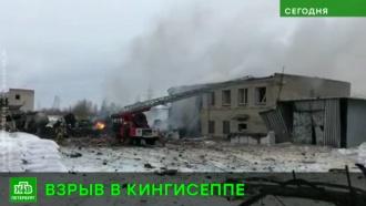 Трясло дома и выбивало окна: очевидцы рассказали о взрыве на химзаводе в Ленобласти
