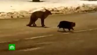 Кот и&nbsp;лиса не поделили колбасу на <nobr>российско-польской</nobr> границе