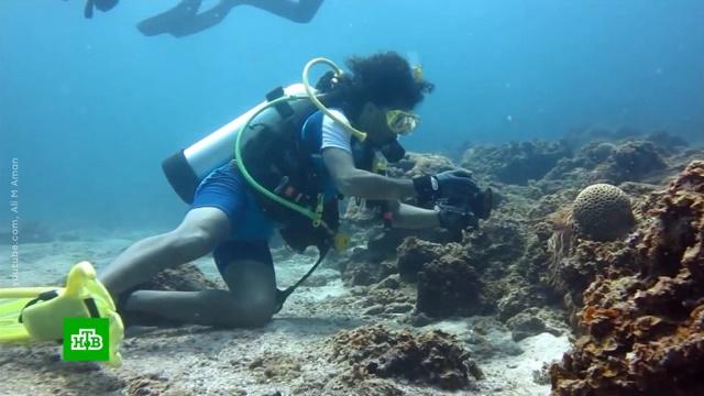 В Бахрейне готовится к открытию крупнейший в мире подводный парк.Бахрейн, дайвинг, парки и скверы, туризм и путешествия.НТВ.Ru: новости, видео, программы телеканала НТВ