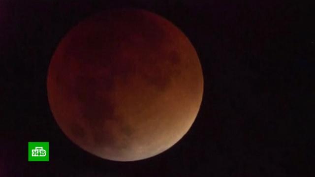 Мир увидел первую в2019году «кровавую» Луну.Луна, затмения, космос.НТВ.Ru: новости, видео, программы телеканала НТВ