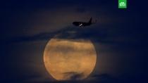 Мир увидел первую в 2019 году «кровавую» Луну.Жители многих стран сегодня наблюдали редкое астрономическое явление — так называемую кровавую Луну.Луна, затмения, космос.НТВ.Ru: новости, видео, программы телеканала НТВ