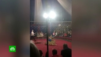 На Кубани начался суд по делу онападении циркового льва на ребенка