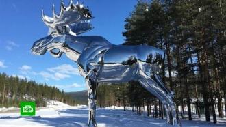 Норвегия и Канада меряются лосями
