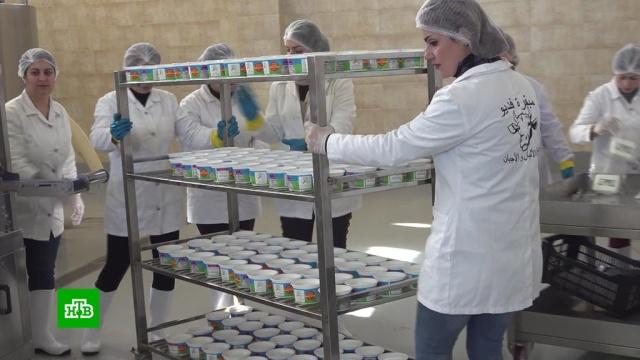 Всирийской Латакии на полную мощь заработал молочный завод.Сирия, заводы и фабрики.НТВ.Ru: новости, видео, программы телеканала НТВ