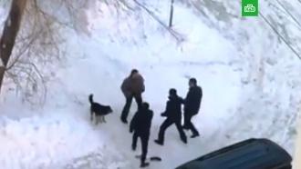 ВСамаре группа мужчин расстреляла собак иих <nobr>хозяина-инвалида</nobr>