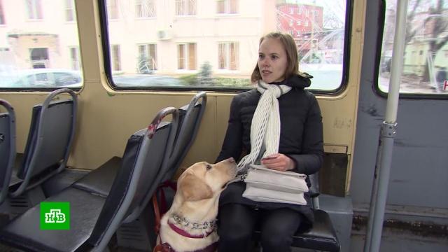На Кубани девушку-инвалида ссобакой-поводырем не пустили вавтобус.скандалы, животные, собаки, автобусы, слепые, инвалиды, общественный транспорт, Краснодарский край.НТВ.Ru: новости, видео, программы телеканала НТВ