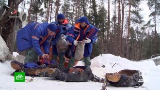 Космонавты из ОАЭ проходят тренировки по выживанию вподмосковном лесу