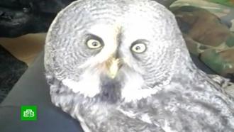 Замерзшую сову спасли на трассе под Тюменью