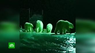 На Новой Земле ввели режим ЧС <nobr>из-за</nobr> нашествия белых медведей
