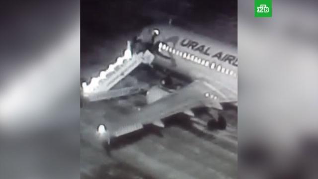 Появилось видео падения пассажиров с трапа в аэропорту Барнаула.Барнаул, авиационные катастрофы и происшествия, аэропорты, самолеты.НТВ.Ru: новости, видео, программы телеканала НТВ